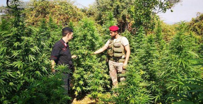 In manette per droga due giovani di San Luca