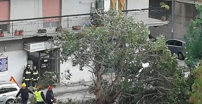 Il maltempo continua a fare danni. Albero sradicato a Reggio