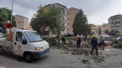 Castore al lavoro dopo il maltempo. Ripristinate strade e verde pubblico