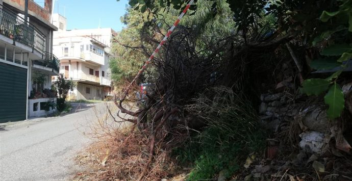Motta, crolla albero in via Ulisse. Crea: «I veri lavori alla garibaldina»