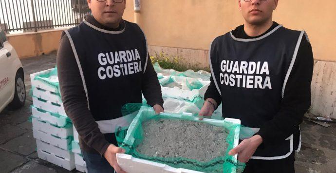 Villa, sequestrati oltre 700 chili di bianchetto dal valore di 25 mila euro