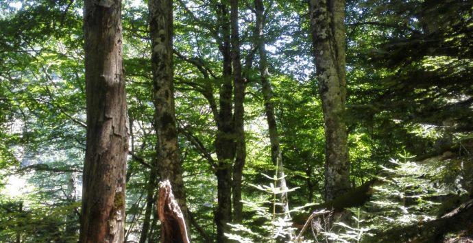 Parco Aspromonte, la Valle infernale nel sito seriale Unesco
