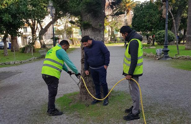 Villa comunale, interventi di miglioramento del suolo a protezione dei ficus