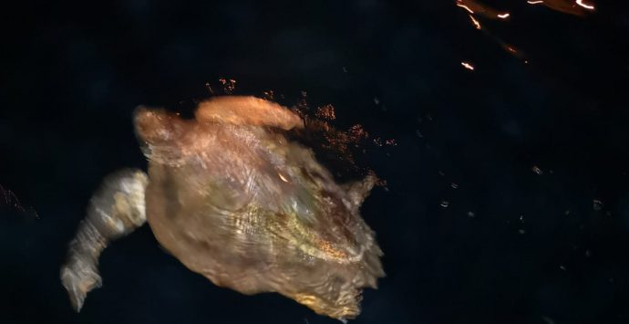 Una tartaruga ferita è stata messa in salvo al porto di Scilla