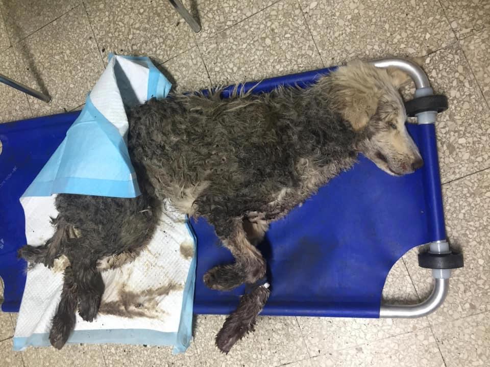 Richiesta d'aiuto per i cani abbandonati a Gambarie