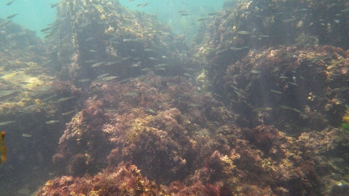 Arpacal, microalghe potenzialmente tossiche su tutto il litorale calabrese