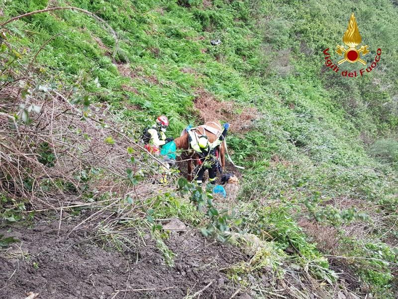 Campo Calabro e Candidoni, i Vigili del Fuoco recuperano 4 cavalli in difficoltà