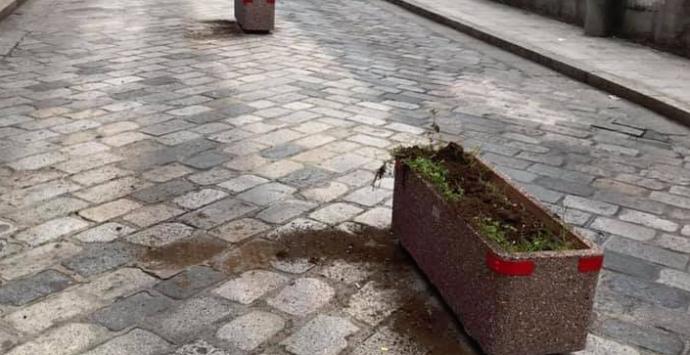Polistena, vandalizzate nella notte le piante di via Trieste. Lo sdegno del sindaco