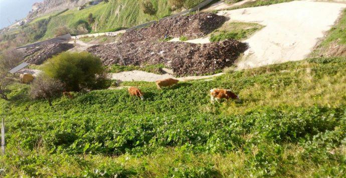 Comunia, Crea: «Ignoto il contenuto dei recipienti tossici sotterrati a valle della discarica»