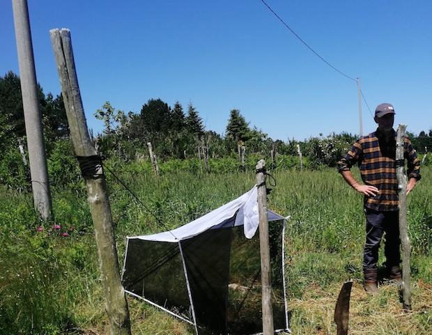 """Parco d'Aspromonte, parte il progetto """"Simpara"""" per la salvaguardia degli impollinatori"""