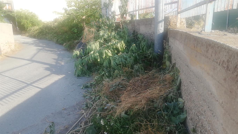Reggio Calabria, Crea: «Lazzaro, paese abbandonato tra sterpaglie, rifiuti stradali»