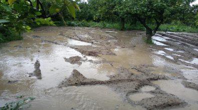 Reggio Calabria, Crea: «Dopo i lavori dell'attraversamento sul Valanidi le acque piovane invadono gli agrumeti»