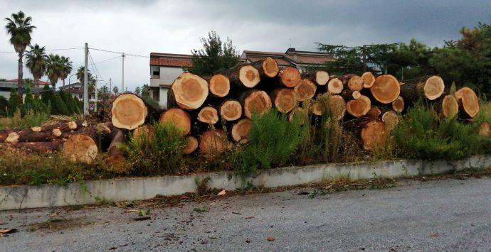Oppido, Giannetta si scaglia contro l'abbattimento degli alberi monumentali
