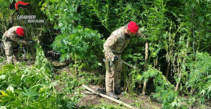 Detenzione di droga, quattro arresti dei carabinieri a Calanna