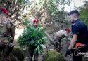 Droga a San Luca, i carabinieri scoprono altre due piantagioni