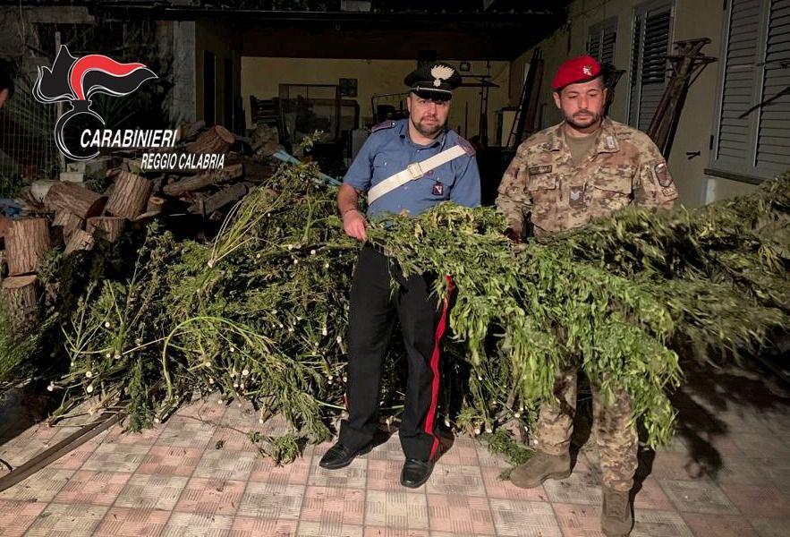 Gioia Tauro, beccati a coltivare canapa: arrestati
