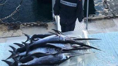 Reggio Calabria, sequestrati oltre cento piccoli esemplari di pesce spada