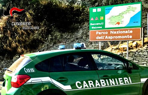 Dispersi nel parco nazionale d'Aspromonte, ritrovati dai carabinieri forestali