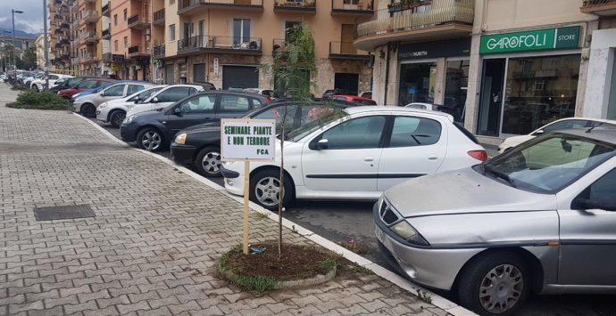 Anche a Reggio Calabria  celebrata oggi la tradizionale Festa dell'Albero