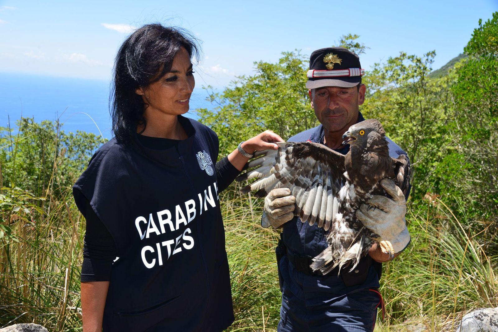 Carabinieri a tutela della flora e della fauna a rischio. Ecco il calendario Cites 2021