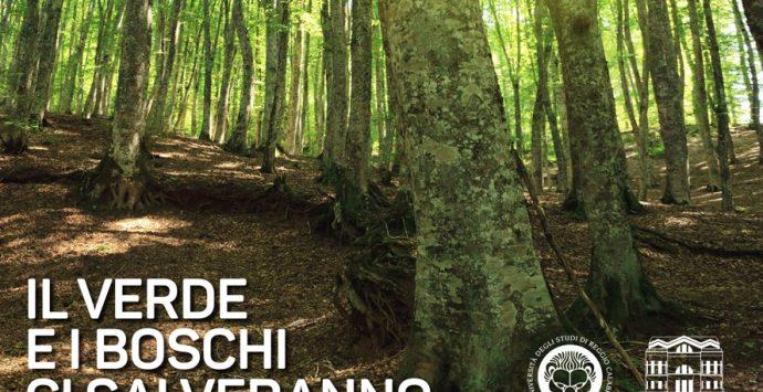 Università Mediterrea, il dipartimento di Agraria celebra la giornata degli alberi