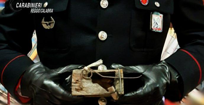 Taurianova, nascondeva 72 ghiri in un casolare. Denunciato un agricoltore