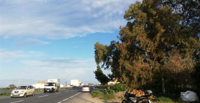 Bocale, alberi su via Campoli. L'allarme di Crea