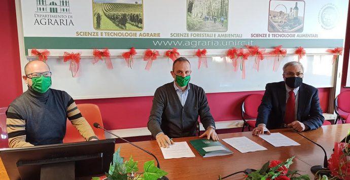 Università Mediterranea, accordo tra Agraria e Accademia delle Imprese