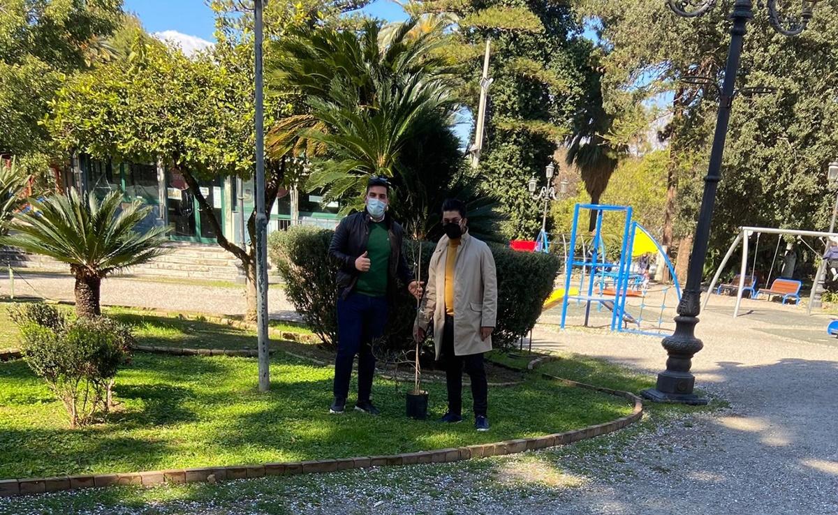 Reggio, due rari ulivi bianchi piantati all'interno della Villa Comunale