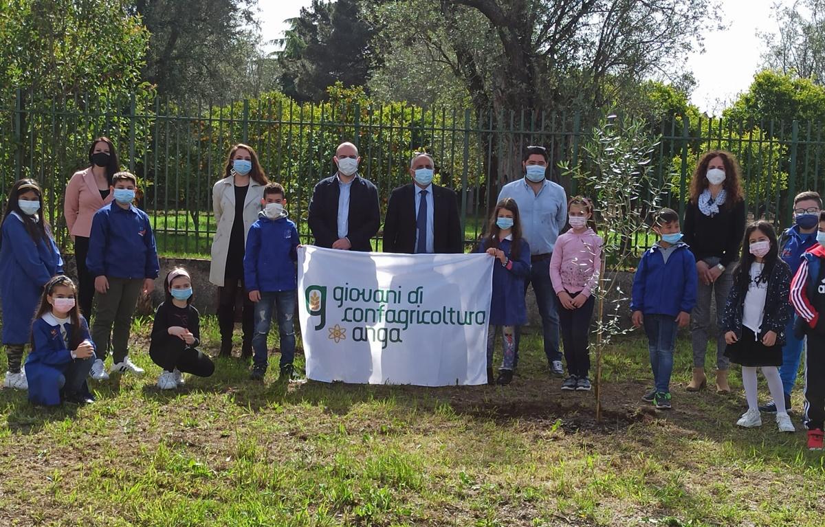 Taurianova, l'Anga pianta alberi di ulivo negli spazi verdi delle scuole