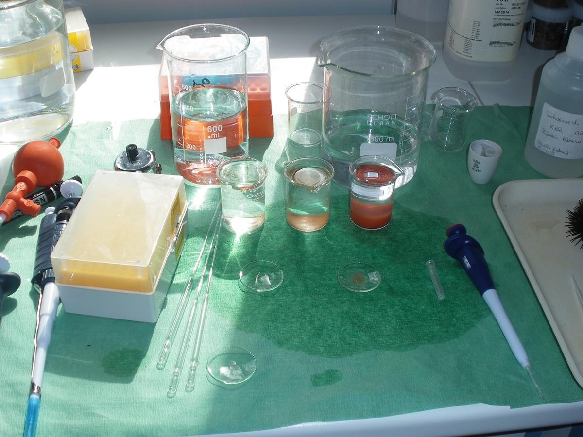 Balneazione, a San Ferdinando l'Arpacal trova presenza di Escherichia coli