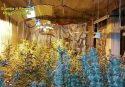 Siderno, coltivava cannabis in garage: arrestato
