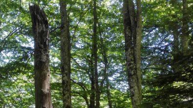 Parco d'Aspromonte, l'antica faggeta tra i patrimoni mondiali dell'Unesco