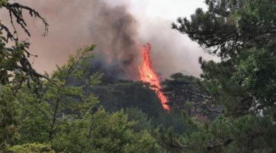 Foreste bruciate e paesaggi lunari. Il triste Ferragosto del Parco d'Aspromonte